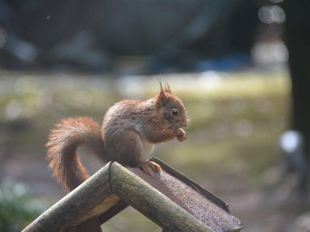 Een graag geziene gast, vooral met noten en pelpinda''s goed te lokken